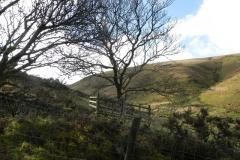 Hoar Oak Tree to Roborough Castle