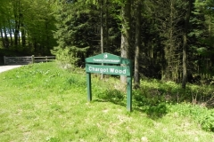 K. Chargot Woods to Upper Pond Cottages :: Chargot Woods Headwaters East