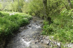 L. Traphole Stream :: C. Comberow to Pitt Mill