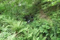 Lyn Down Tributary Stream