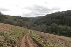 Mansley Coombe to Snowdrop Valley