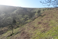 Source to Aller Combe